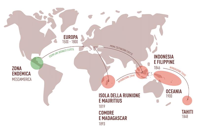 Introduzione della vaniglia nel mondo